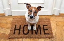Tips for Renting property With a Dog
